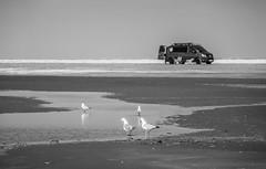 IMG_6511 (ro3duda) Tags: denmark nordsee ostsee northsea eastsea summer beach sand seaside dänemark römö romo rømø