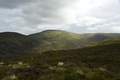 Sunshine on the Hills (steve_whitmarsh) Tags: aberdeenshire scotland scottishhighlands highlands mountain hills topic
