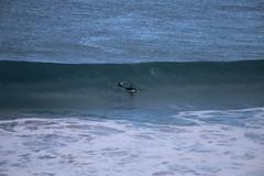 IMG_3555 (gervo1865_2 - LJ Gervasoni) Tags: surfing with whales lady bay warrnambool victoria 2017 ocean sea water waves coast coastal marine wildlife sealife blue photographerljgervasoni
