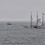 Raising his sail thumbnail