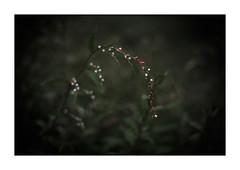 LIttle blooming (gol-G) Tags: fujifilm xh1 fujifilmxh1 digital nokton 35mm f12 voigtlander aspherical color