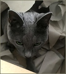 Thank you Mr Amazon! (Sandi - (Very Busy Lady!)) Tags: max cat box paper pano1000 aug18