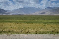 Marmot Land