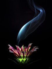 live candle (Ichi De) Tags: live candle smoke flower color red green blue abstractnature fineart pentacon prime omd vintagelens manualfocus light dark close up