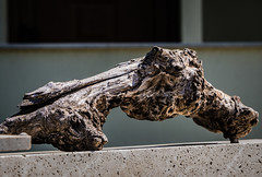 A something (Мaistora) Tags: wood tree piece knotty gnarly old dry twisted aged nature natural sculpture abstract imagination imaginary interpret interpretation guess resemblance creature artwork relief texture olive greece sony alpha ilce a6000 sel55210 lightroom