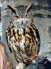 What are you looking at? (sharon.corbet) Tags: owl edinburgh scotland gladstonesland royalmile 2018 uk