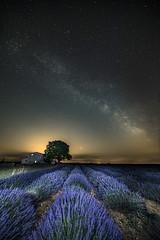 Une nuit sur le plateau de Valensole... (oli0205) Tags: voielactée provence lavande france valensole lavender irix 11mm poselongue nuit étoiles milkiway canon canon5dmk4 cartonolivier
