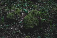 DSC_0105 (Hilðr) Tags: mountains trees rocks forest woods view horizon canyon hills pine stones moss norse inspiration spirit hiking dark
