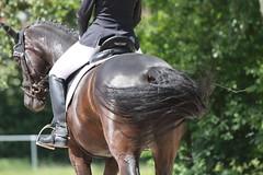 _MG_9710 (dreiwn) Tags: dressurprüfung dressurreiten dressurpferd ridingarena reitturnier reiten reitplatz reitverein reitsport ridingclub equestrian horse horseback horseriding horseshow pferdesport pferd pony pferde tamronsp70200f28divcusd dressur dressuur dressyr dressage