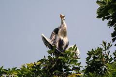 D850-3156 (yowstanley) Tags: nikon nature bird 200500mm d850 tree garden