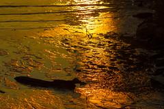 Sunset Reflections along the Hudson (JMFusco) Tags: newyork sunset hastingsonhudson newyorkstate landscape westchestercounty hudsonriver nature