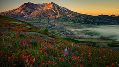St Helens Paintbrush (Dan Mihai) Tags: mountsthelens volcano crater wildflowers lupines indianpaintbrush beautiful nature washingtonstate pacificnorthwest