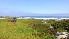 Pacific Grove, Monterey Peninsula, CA (ArgyleMJH) Tags: geology pacificgrove marinerefuge oceanviewboulevard shorelineparkway ocean waves rocks johndenver memorial