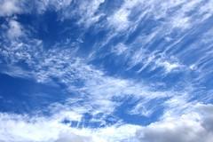 DSC_1614 (PeaTJay) Tags: nikond750 reading lowerearley berkshire gardens outdoors nature blue sky clouds