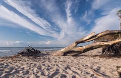 Nature is back (Marlis B) Tags: weststrand ahrenshoop sea sand ostsee baumstamm