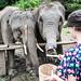 Thaïlande - Elephants sanctuary