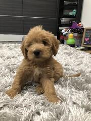 Yogi says Hi
