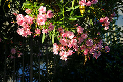 IMG_0885 (Panka Mattesz) Tags: tuscany summer florence