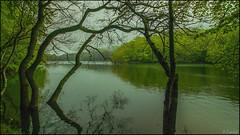 Reflejos en el pantano. (antoniocamero21) Tags: reflejos verde troncos hayas pantano color foto sony primavera montseny natural parque barcelona catalunya