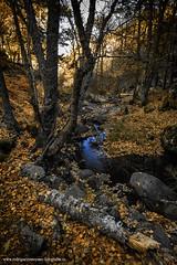 Ya viene el otoño (luisrguez) Tags: es españa spain madrid guadarrama wwwrodriguezymoyanofotografoses