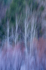Winter Abstract (Chris Skopec) Tags: california nationalparks sierranevadamountains sierras usa yosemite yosemitenationalpark yosemitevalley landscapephotography landscapes mountains scenic travel winter