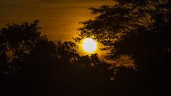 Atardecer en el río Magdalena (José M. Arboleda) Tags: paisaje sol cielo rojizo nube atardecer puestadelsol anochecer río agua reflejo santacruzdemompox mompox bolívar colombia canon eos 5d markiv ef70200mmf4lisusm14x josémarboledac