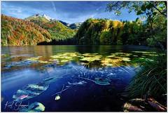 Seerosen (Karl Glinsner) Tags: landschaft landscape österreich austria oberösterreich upperaustria outdoors berge mountains see lake herbst autumn fall seerosen waterlily