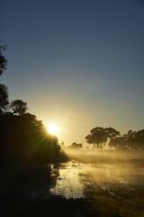 Sunrise (Stueyman) Tags: sony alpha a7 a7ii wa australia au za zeiss sonnartfe1855 55mm westernaustralia mist fog goldenhour golden light nature sunrise