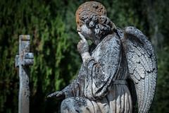 FRANCE (WeVe1) Tags: cimétière graveyard angel ange gravestone ssst