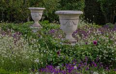 From the Sofiero castle garden (frankmh) Tags: garden plant flower sofiero sofierocastlegarden helsingborg skåne sweden