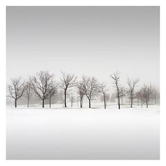 Line of Trees (Vesa Pihanurmi) Tags: trees nature winter minimalism snow espoo finland