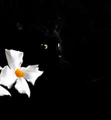 Eyes in the dark (Pepenera) Tags: cat cats gatto gato gatti black blackbeauty