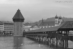 Classical bridge. (natureflower) Tags: chapelbridge water tower switzerland bw swans cloudyday luzern lake old landscape lucerne