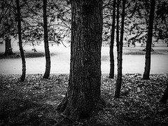 rnor82537.jpg (Robert Norbury) Tags: fuckit somearelandscapessomearenot icantbearsedkeywording fineartphotography blackandwhite photographer itdoesntmatterwhattheyarepicturesoftheyarejustpictures itdoesntmatterwhattheyarepicturesoftheyarejustpictur