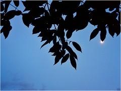 Happy World Photography Day (arajitgharai) Tags: worldphotographyday photography flickr evening scenario sunset moment candid