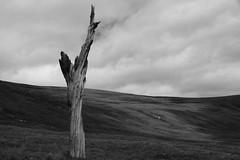 Harsh Landscape (steve_whitmarsh) Tags: aberdeenshire scotland scottishhighlands highlands mountain hills cairngorms trees landscape bw blackandwhite monochrome topic