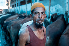 Portrait of a cow seller. (A. adnan) Tags: people cow cattle eiduladha chittagong bangladesh fuji x100f fujix100f cattlemarket festival muslim islam islamicfestival muslimculture reportage documentary documentaryphotography
