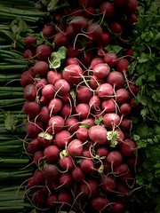 Enlightened radishes (kimbar/Thanks for 3.5 million views!) Tags: radishes vegetables store market oakland california sprouts