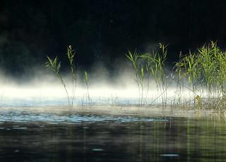 The morning mist..
