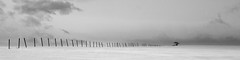 ile 2018-122 (Tasmanian58) Tags: tree fence snow winter bw «black white» sony a7ii minolta rokkor 58mm f14 vintage lens landscape nb noirblanc «noir et blanc»