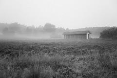Nebel über der Lüneburger Heide (Gret B.) Tags: nebel heide lüneburgerheide fog morning morgen morgens morgennebel schwarzweis blackandwhite grau trüb finster dunkel melancholie