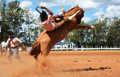 Luciano Rojas (Eduardo Amorim) Tags: gaúcho gaúchos gaucho gauchos cavalos caballos horses chevaux cavalli pferde caballo horse cheval cavallo pferd pampa campanha fronteira quaraí riograndedosul brésil brasil sudamérica südamerika suramérica américadosul southamerica amériquedusud americameridionale américadelsur americadelsud cavalo 馬 حصان 马 лошадь ঘোড়া 말 סוס ม้า häst hest hevonen άλογο brazil eduardoamorim gineteada jineteada