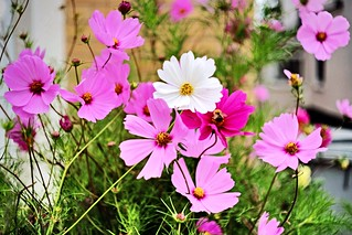 Flowers (DSCF1547)