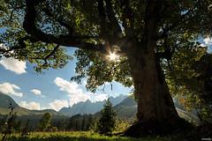 am Kleinen Ahornboden (lichtauf35) Tags: kleinerahornboden intothelight morning landscape favouriteplaces oldtree magicalplaces karwendel sunshine flares derzeitaugenblickestehlen 3000views 50favs lichtauf35