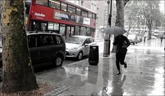 `2386 (roll the dice) Tags: london surreal streetphotography mad fun funny wet rain weather storm puddles people fashion canon tourism tourists uk classic art urban unaware unknown candid strangers portrait shops shopping natural wisdom graysinn bus run travel transport colour blackandwhite casper trees umbrella camden wc1 metroline fog