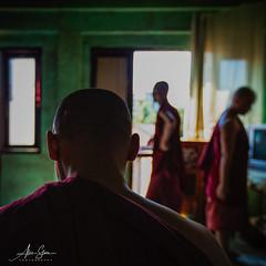 Monks at the Chaukhtatgyi  Monastery (Yangon, Myanmar 2013) (Alex Stoen) Tags: burma burmese devotion faith heritage monastery monks myanmar portrait religious simplelife simplicity travel vacation yangon buddha buddhism spirituality