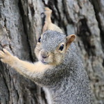 87/365/3739 (September 6, 2018) - Squirrels in Ann Arbor at the University of Michigan on September 6th, 2018 thumbnail
