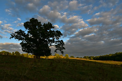 In the evening (trojanhorse1956) Tags: downton wiltshire nikon clouds