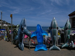 New Quay - a new sort of dolphin watching (Dubris) Tags: wales cymru newquay seaside coast summer ceredigion dolphin whale inflatable
