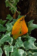 Autumn Sketchbook (shmc5hamer) Tags: autumn colour kyoto